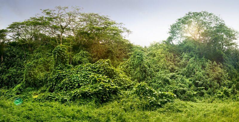 Джунгли на островах Кука