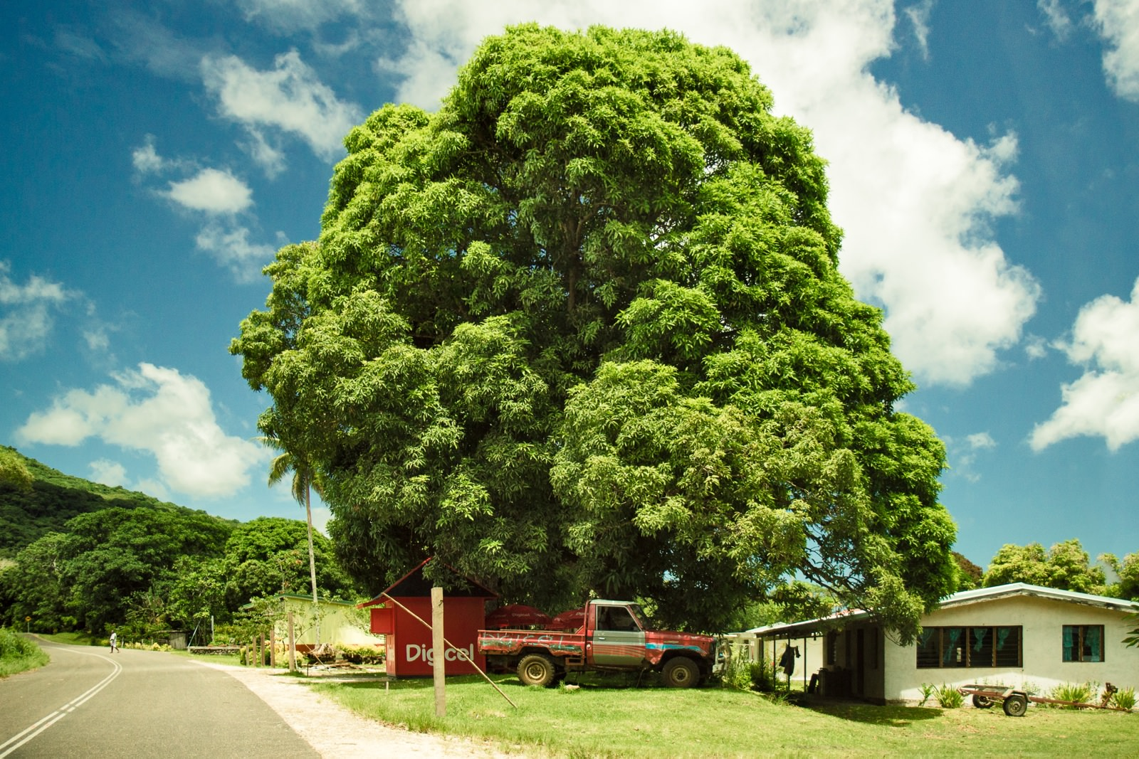 vanuatu_tree_IMG_6795-Edit