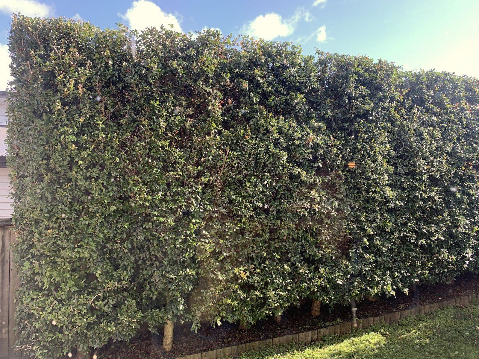 Зелёная ограда