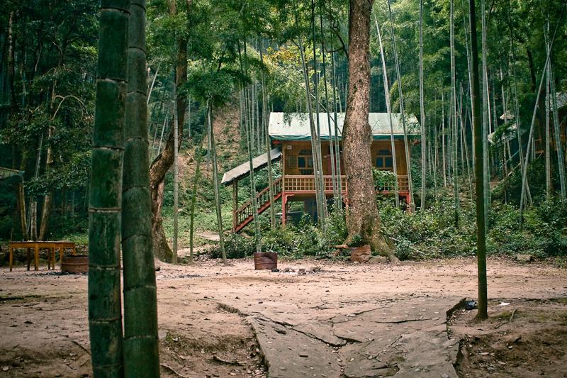 Бамбуковый лес близ Нанчанга