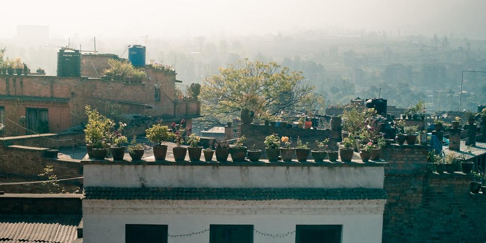 Крыши и цветы