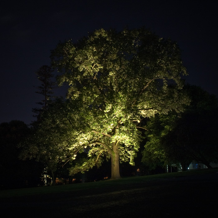 http://piterpan.ru/nz_auckland_domain_night_tree.jpg