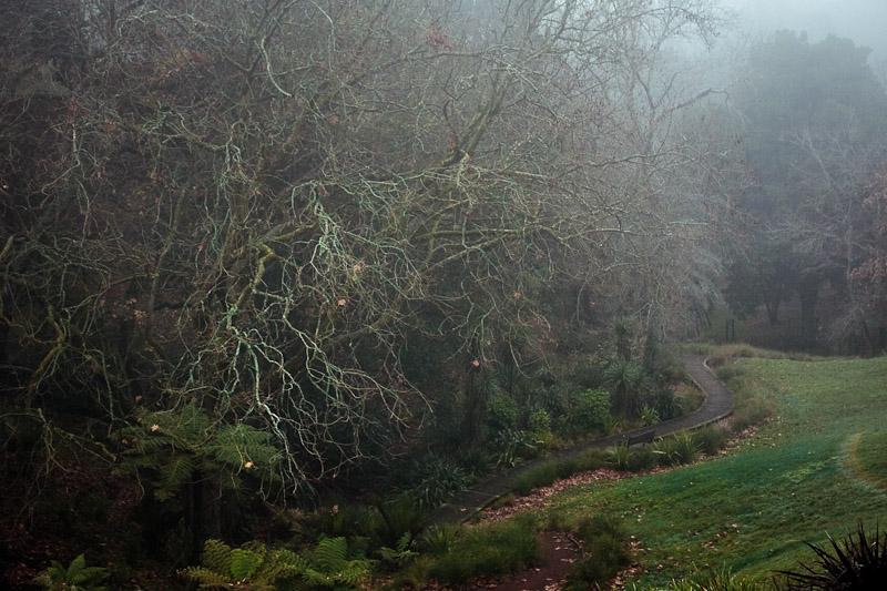 Туманный парк в Грей Лине