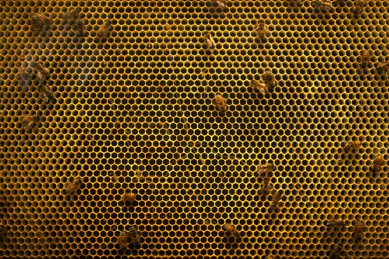 Соты на пчелиной ферме