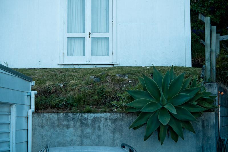 Растение у дома