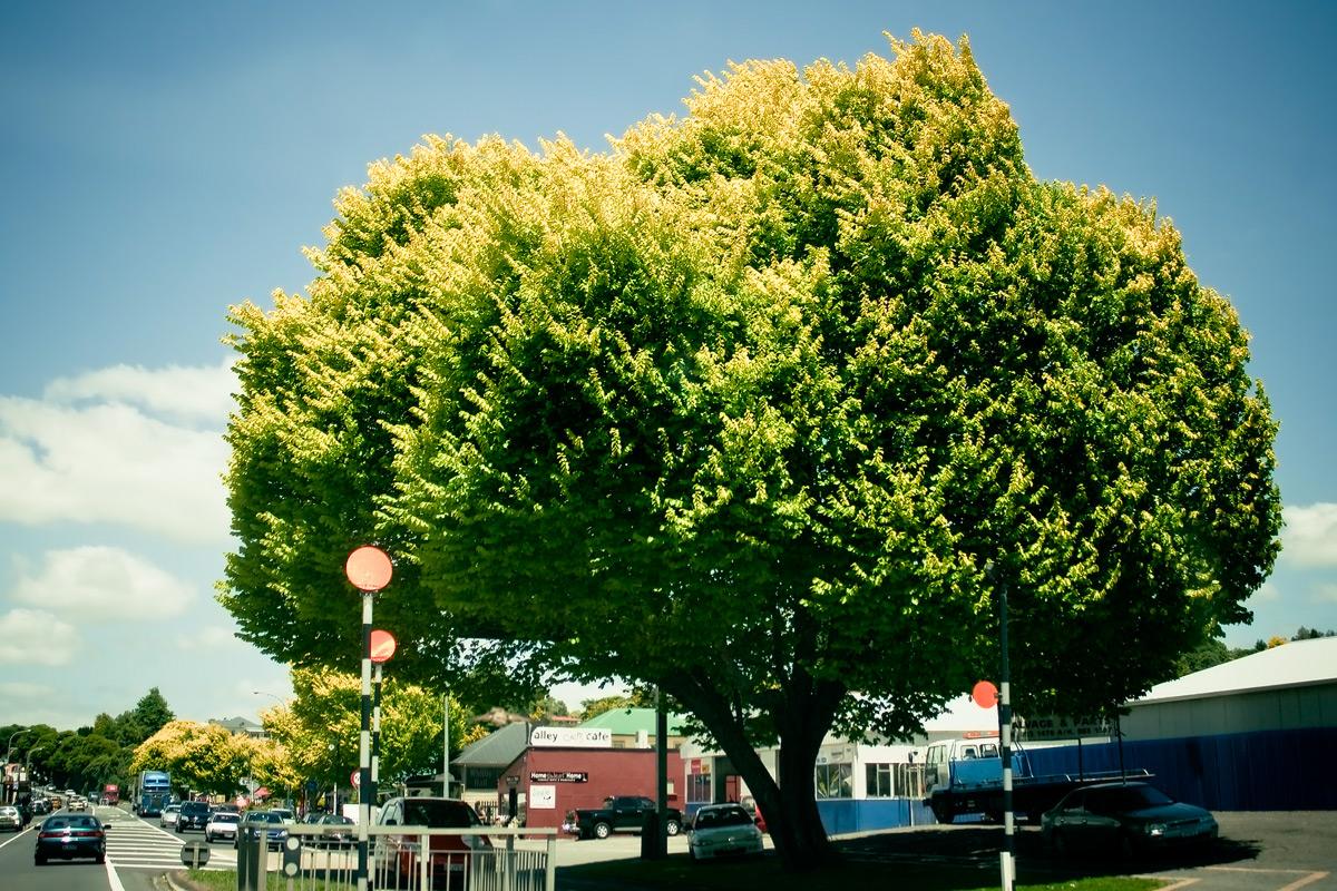 Жёлто-зелёное дерево