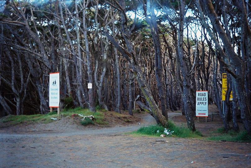 Лес с предупреждающими знаками.