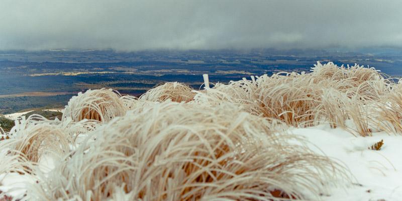 Замёрзшая трава с видом