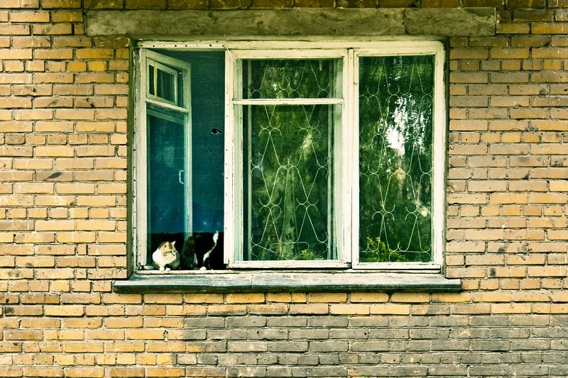 Коты в окне