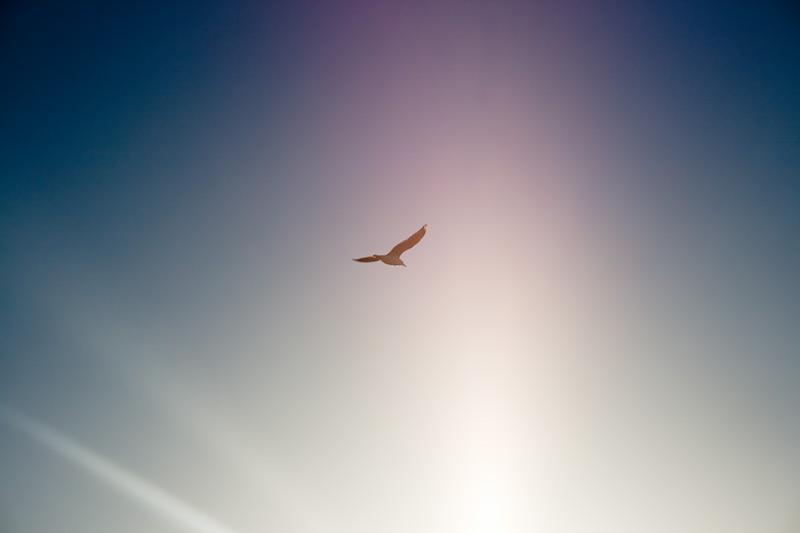 Чайка в Кайкуре