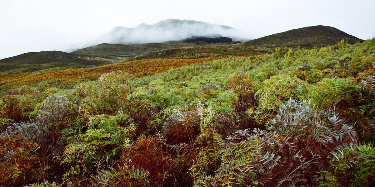 По пути на западное побережье Южного острова