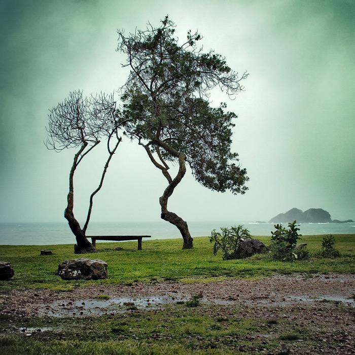 http://piterpan.ru/waihike_tree_bench.jpg